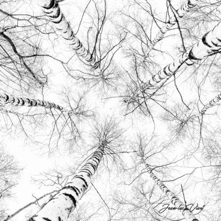 les arbres bouleaux photographie de montagne Savoie haute Maurienne Vanoise parc national de la Vanoise