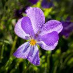 147.fleur 4