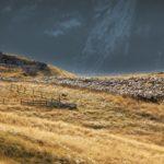 246.moutons à la loza60x120