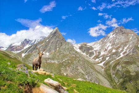 haute maurienne vanoise parc national de la vanoise savoie mont blanc orgere